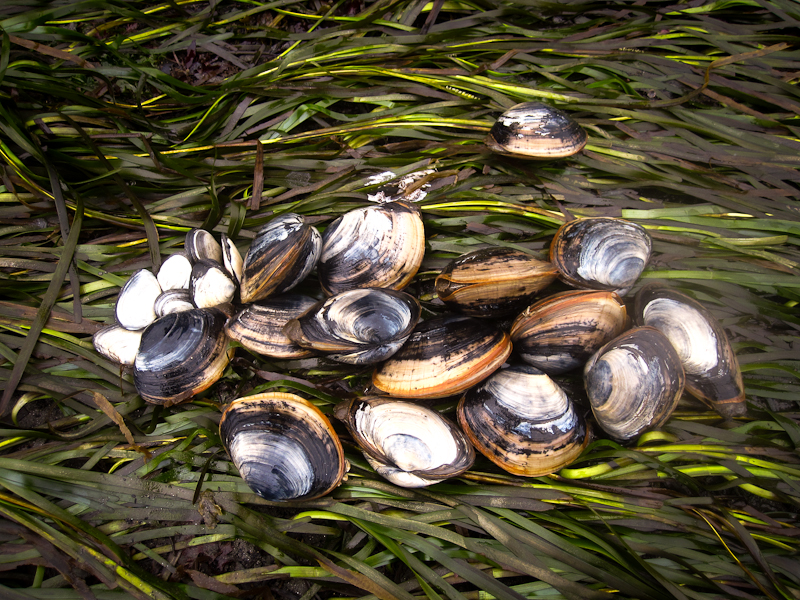 Clamming on the Oregon Coast